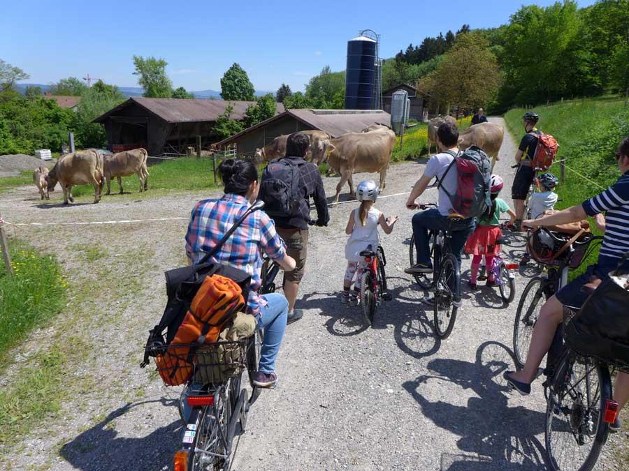 Innehalten, weil erst der Bauer sein Vieh auf die Weide treiben will und dazu den Weg kurzzeitig absperren muss: Fotografiert am Pfingstsamstag beim Gfellergut in Zürich-Stettbach.